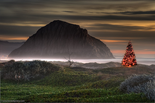 Christmas Tree In Nature