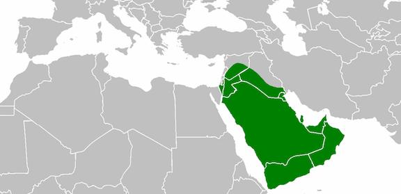 Abu Bakr Term